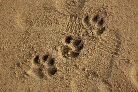 spiagge per cani in Toscana