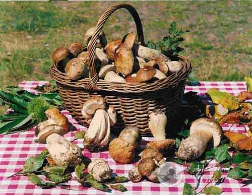 festa dei funghi friuli